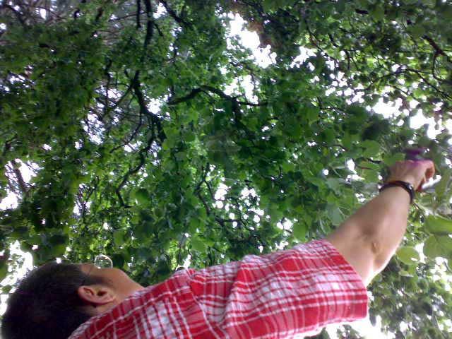 Anja´s Blick in den Baum
