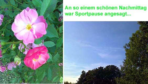 Rosen und Himmel