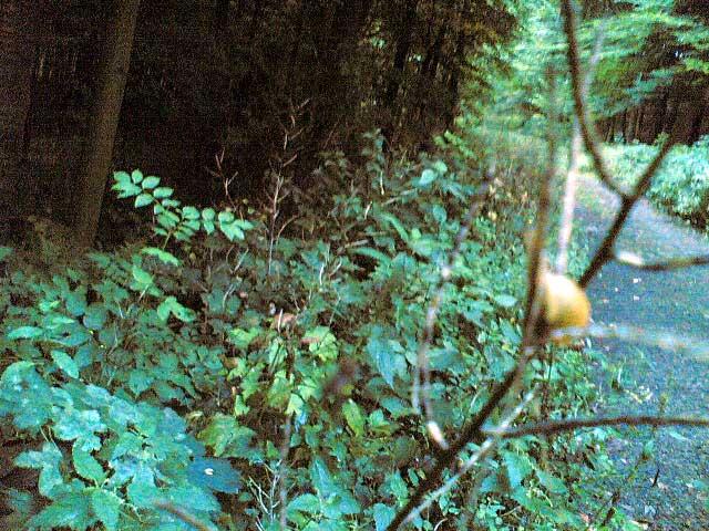 Wald Farbe