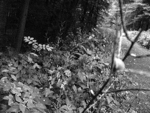 Wald schwarz/weiß