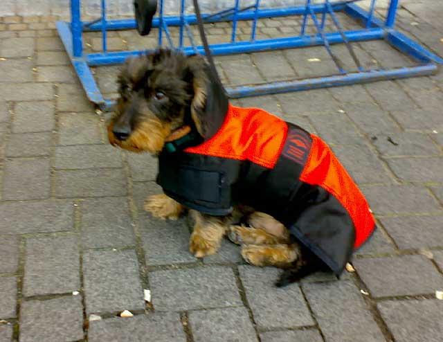 Hund mit Jacke