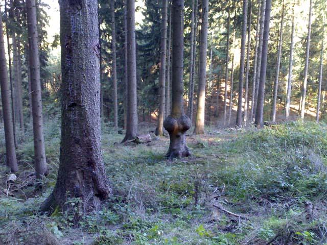 3witzbaum_1_17102006